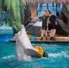Дельфинарии, океанариумы в Павловском Посаде
