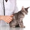 Ветеринарные клиники в Павловском Посаде